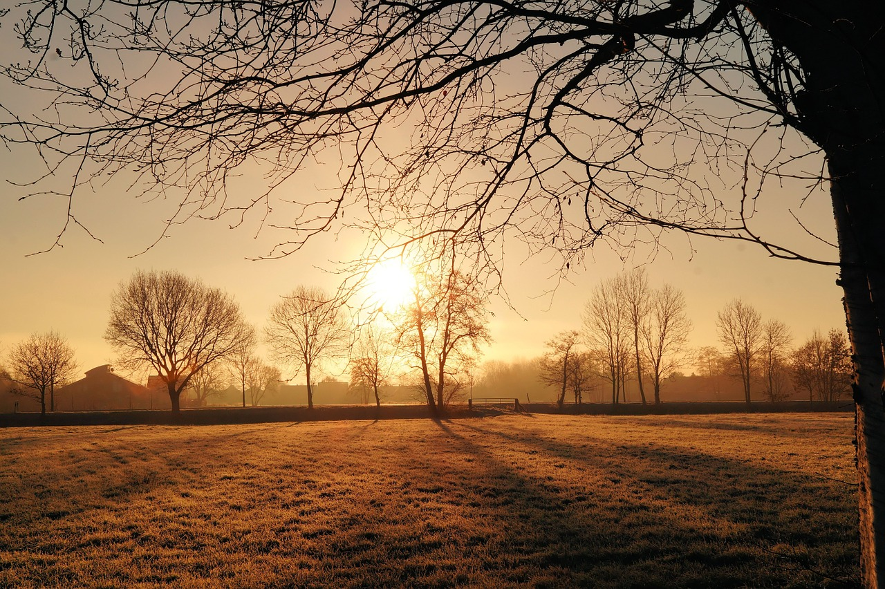 Sunrise over cold field, trees bare of leaves