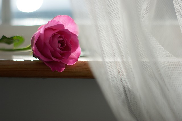 Sheer white curtain, with pink rose